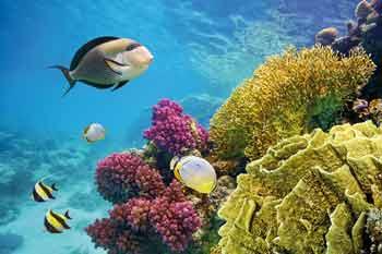 aquarium sables olonne